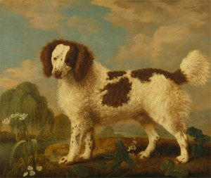 Brown and White Norfolk or Water Spaniel Date, 1778.  By George Stubbs (1724-1806, British).  Yale Center for British Art, Paul Mellon Collection